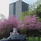 Toronto in Springtime by livelearn50