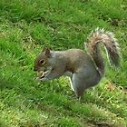 Squirrel with nut by MyPixx