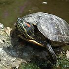 Multicoloured Terrapin by MyPixx