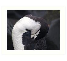 Chinstrap Penguin , Antarctica Art Print