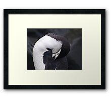 Chinstrap Penguin , Antarctica Framed Print
