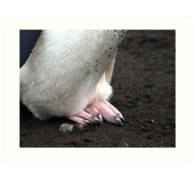 Penguin feet , Antarctica Art Print