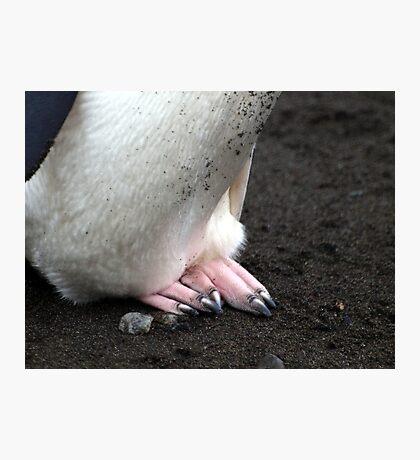 Penguin feet , Antarctica Photographic Print