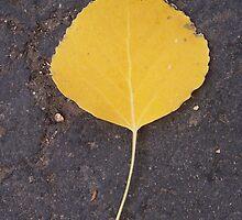 lone leaf by sbm-designs