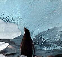 Penguin Ice by geophotographic