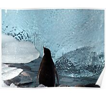 Penguin Ice Poster