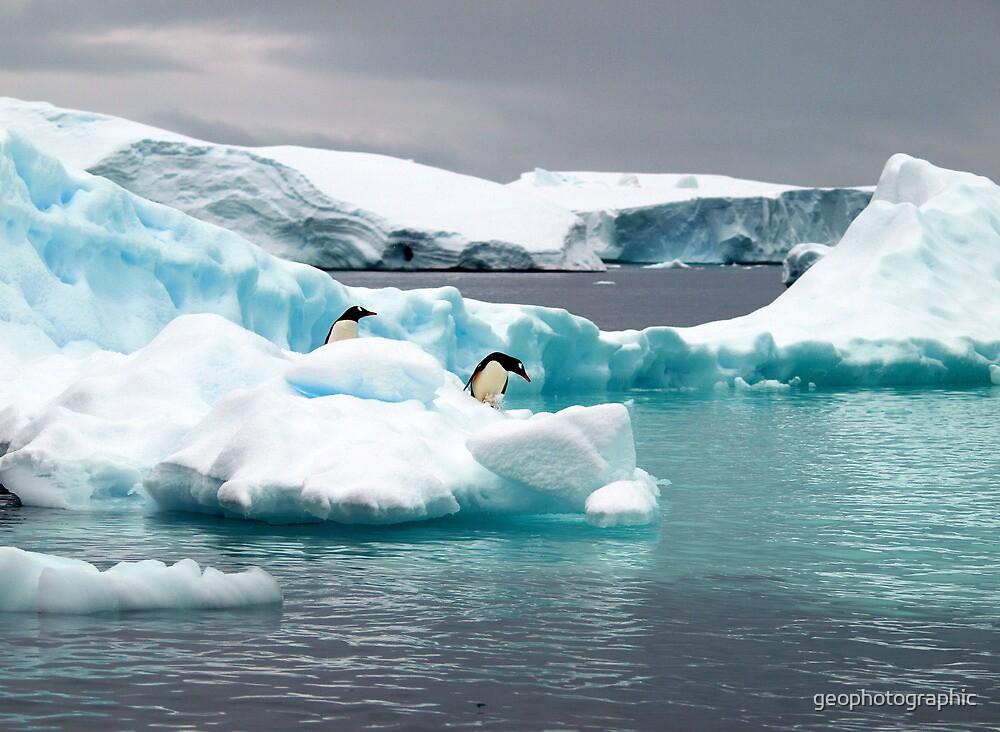 Penguin iceberg by geophotographic