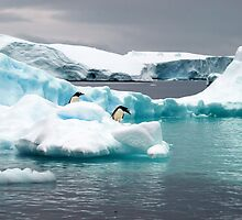 Penguin iceberg by geophotographic
