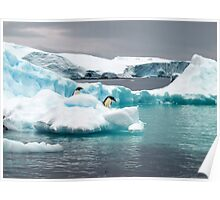 Penguin iceberg Poster