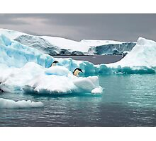 Penguin iceberg Photographic Print