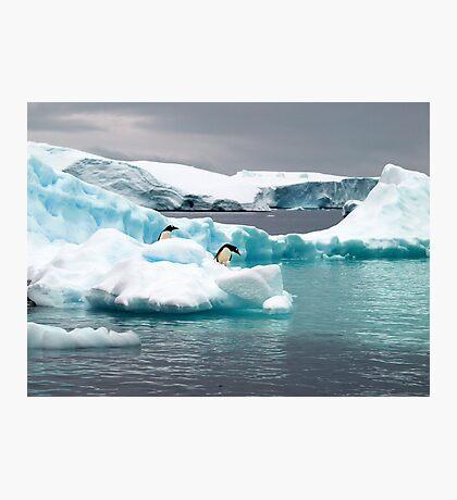 Penguin iceberg Photographic Print