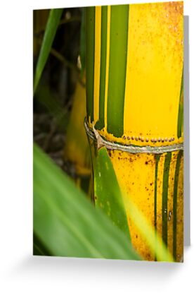 yellow bamboo by Anne Scantlebury