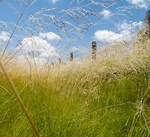 long grass by Anne Scantlebury