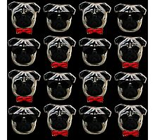 Cool Pugs Photographic Print