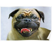 Pug Portrait Poster