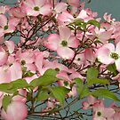 Pale Pink Dogwoods Outside the Wayne Library by Jane Neill-Hancock