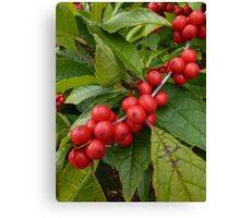 Red and Green Holly Berries Canvas Print