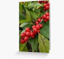 Red and Green Holly Berries Greeting Card