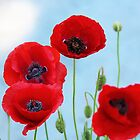 Red Poppies  by Rosanne Jordan