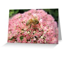 Honey bee on Pink Flower Greeting Card