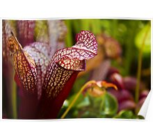 Cobra Lilies Poster