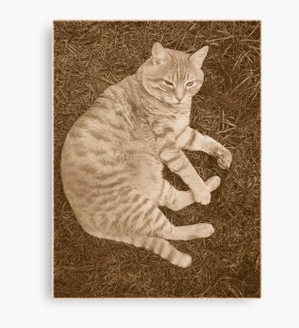 Fat Cat In the Grass Canvas Print