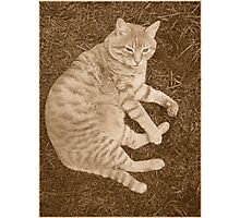 Fat Cat In the Grass Photographic Print