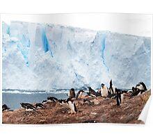 Nesting Penguins, Antarctica Poster