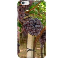 Italian Vinyard iPhone Case/Skin