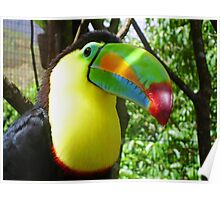 Inquisitive Toucan Poster