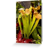 Peridot coloured cobra lilies Greeting Card