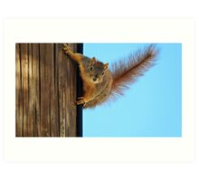 SQUIRREL (19) Art Print