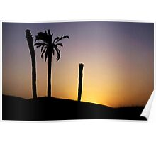 Silhouetted palm trees at sunset in the Sahara Desert Poster