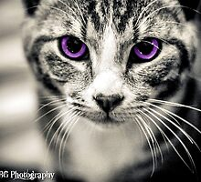 Kitten Creative by KBG-Photography