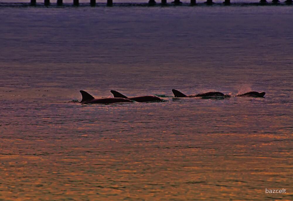 Sunset Frolic, Dolphin Joy by bazcelt