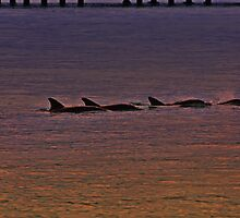 Sunset Frolic, Dolphin Joy by bazcelt