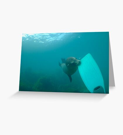 Sea lion biting a diver flipper, Underwater Greeting Card