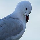 Silver Gull by mncphotography
