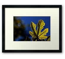 moonlight leaf Framed Print
