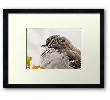 MOCKINGBIRD ON A WINTER DAY Framed Print