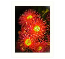 Eucalyptus flower zinging Art Print