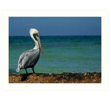 Poised Pelican Art Print