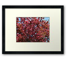 Blossoms up Framed Print