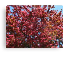 Blossoms up Canvas Print