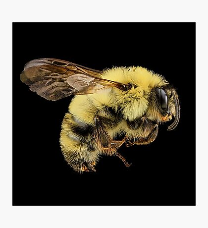 Bees Are Cute Photographic Print