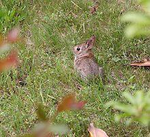 Bitty Bunny by WalnutHill