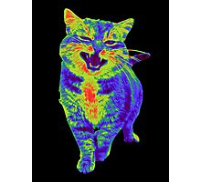 Psychedelic Cat Photographic Print