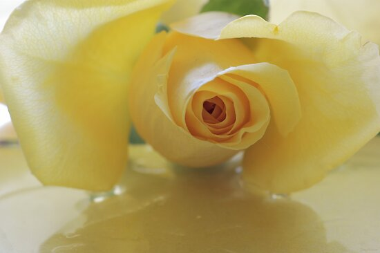 Burst of Sunshine ~ Yellow Rose by JETAdamson