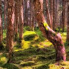 Alaska Rainforest by Bruce Taylor