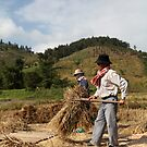 Rice flails at work in Chiang Rai, Thailand. by Phil Bower